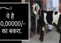 बकरे के कान पर उभर आया ऐसा शब्द, 6 हजार से सीधे 60 लाख पहुंची कीमत